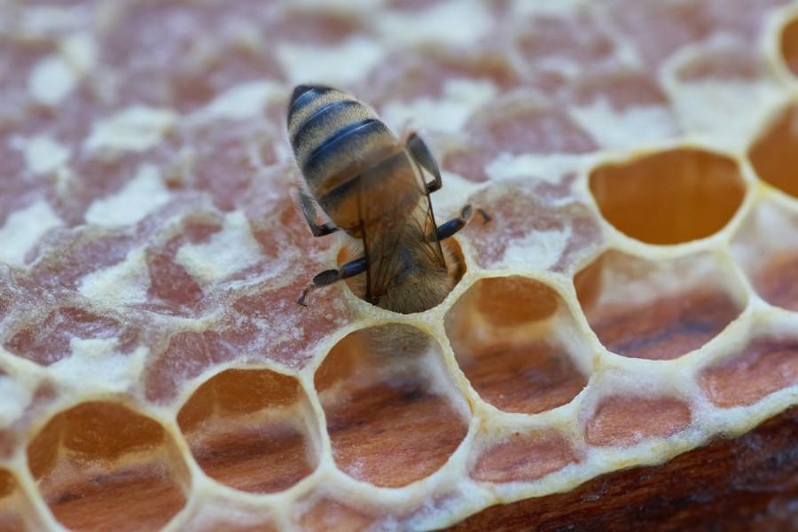 <b>Episode 251</b> The Honey Hole – Fact or Fiction?